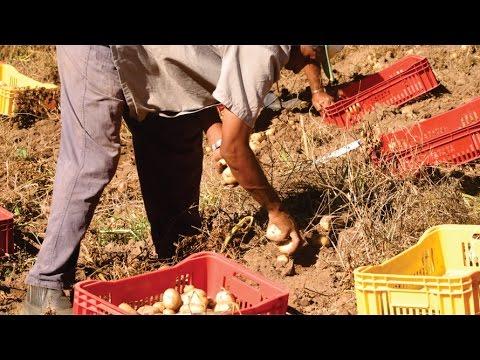 Assentamento Conquista da Liberdade investe em agropecuária e agricultura orgânica em Piratini/RS