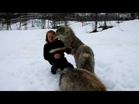 飼養員休產假回來,狼一看見她…嗚咽抱又舔!