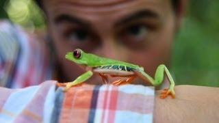 Follow the Frog - save the rainforest indigenous commercial
