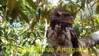 download lagu download musik download mp3 Burung Aneh & Langka