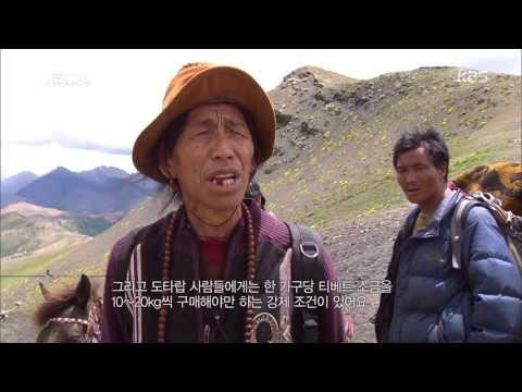 KBS 대기획 디렉터스컷 - 보름의 시간동안 능선을 넘는 만 명의 네팔인들. 20170105