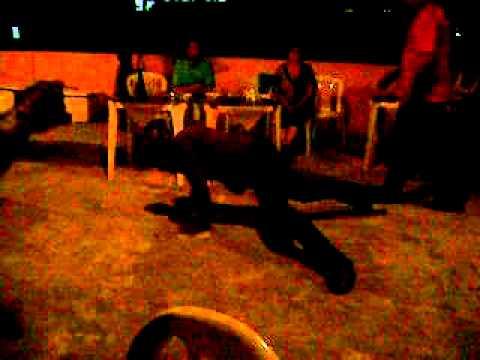 Dança da perereca no cio kkkk (Aniversario Michael 2011).avi