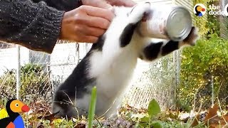 Kitten Stuck In Can Gets Rescued by Awesome Woman | The Dodo by The Dodo