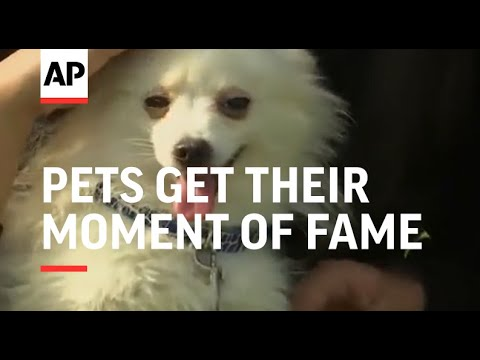 Pets get their moment of fame at Karachi's annual show