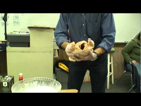 Mummification - A demonstration of the concept of Egyptian mummification by using a chicken, kosher salt, rock salt, and baking soda. Filmed during an Ancient Egypt simulati...