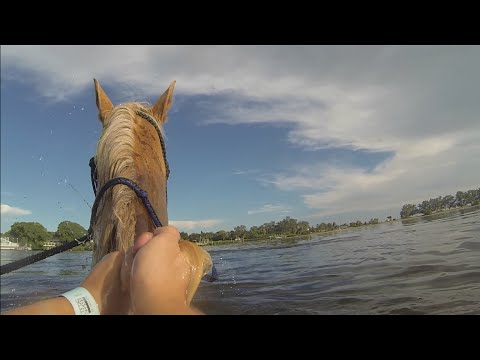 Horseback riding on the beach | Bradenton, FL