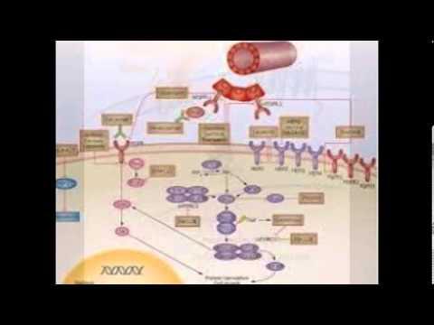 Dovitinib inhibits cell proliferation of KMS11 (FGFR3-Y373C)