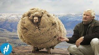 Video Domba Ini KABUR SELAMA 6 TAHUN. Ketika Dia Kembali... MP3, 3GP, MP4, WEBM, AVI, FLV Desember 2018