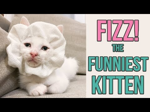 Try Not to Laugh at This Silly Kitten