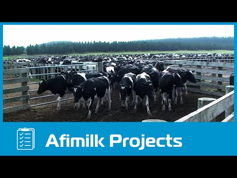 afimilk® – The world's largest dairy farm project in Vietnam