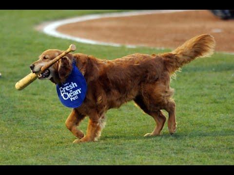 Baseball Legend Dog!