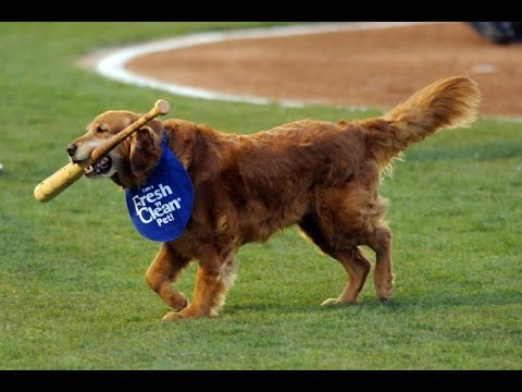 Baseball Legend Dog!