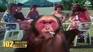 Funny Pets Comedy Scene | Kundan Movie