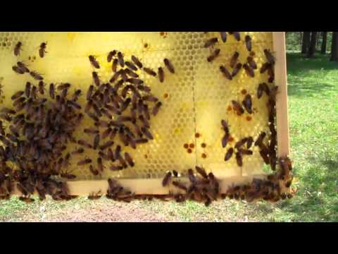 RicsBees Backyard Beekeeping Hive 1 brood chamber
