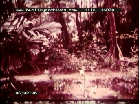 Tropical Rainforest, 1960's - Film 16830
