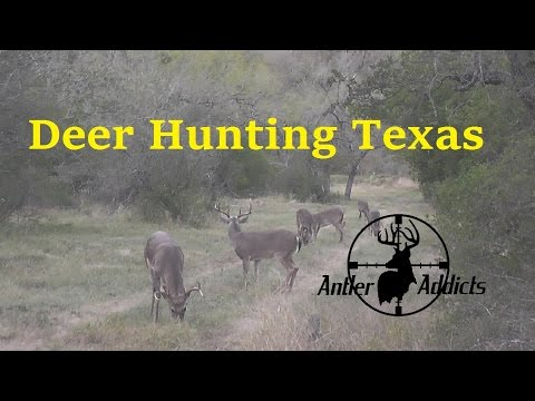 Deer Hunting in Texas Mature Whitetail Buck