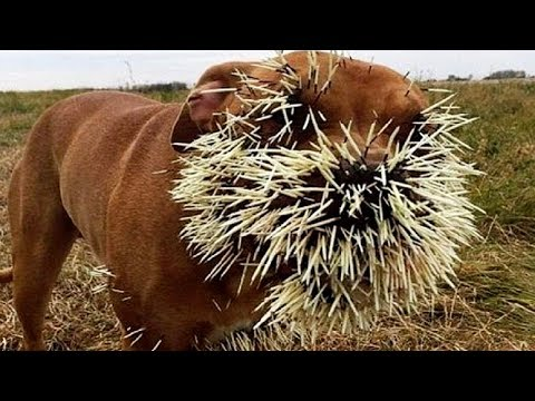 Live: The Best Attacks Of Wild Animals 2017 - Craziest Animal Fights Caught On Camera #3