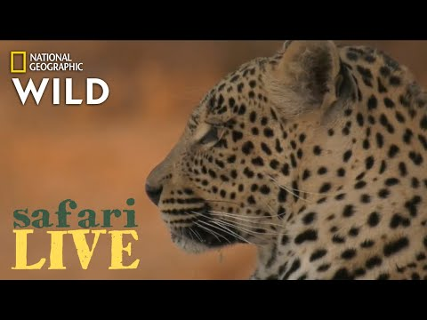 Safari Live - Day 208 | Nat Geo Wild