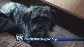 Couple beg for return of dog stolen inside owner's truck