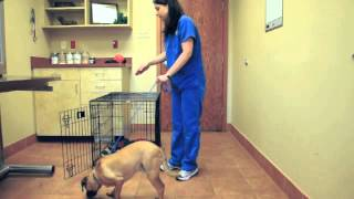 Crates, Treats&Toys - Dog Behavior Tips