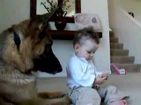 這個小寶寶突然「伸手搶走餅乾」讓全家人都擔心德國狼犬的反應,但牠超暖心的舉動連爸爸都要幫牠出頭!