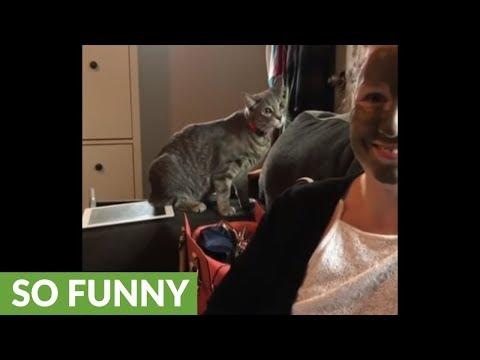 il-gatto-che-non-riconosce-la-sua-umana