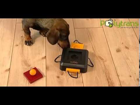 Jeu de stratégie Dog Activity Gamble Box pour chiens