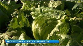 Queda na temperatura deixa produtores rurais preocupados