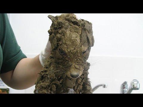 Los trabajadores pensaron que encontraron un perrito sucio, pero cuando lo limpiaron no creyeron ...