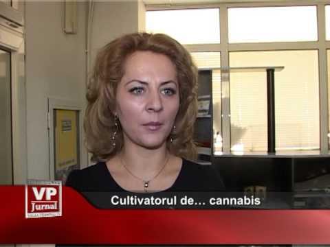 Cultivatorul de… cannabis