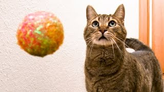 MEAN KITTY & THE WORLD'S FASTEST BALL