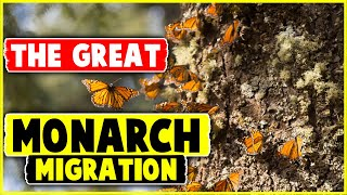 Nonton The Great Monarch Migration Film Subtitle Indonesia Streaming Movie Download