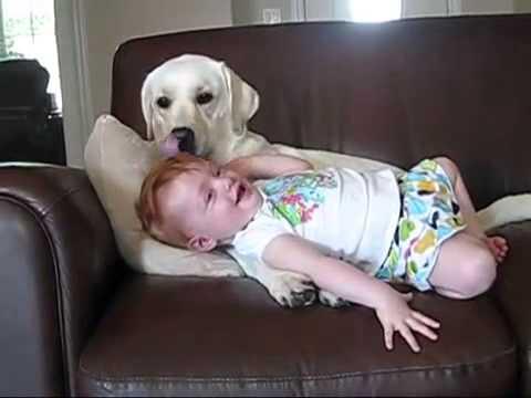 Köpek bebeği gülmekten öldürdü ya (видео).