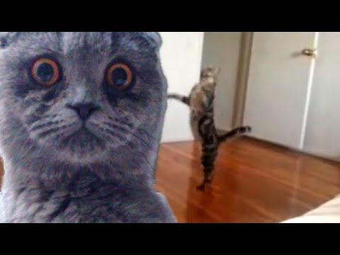 """Epic Funny Cats – Compilation Part Two """"The Cat Strikes Back!"""""""