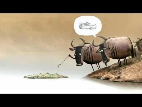 Hoạt hình hài hước  Những chú bò qua sông
