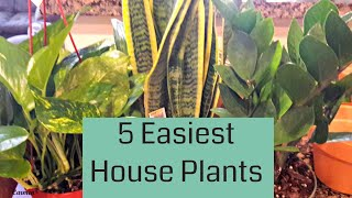 Top 5 Easiest House Plants