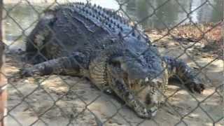 Rockhampton Australia  city pictures gallery : Koorana Crocodile Farm, Rockhampton, Queensland Australia