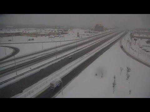 Un harfang des neiges filmé par une caméra de surveillance
