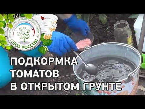 Чем удобрять помидоры. Подкормка томатов в открытом грунте.