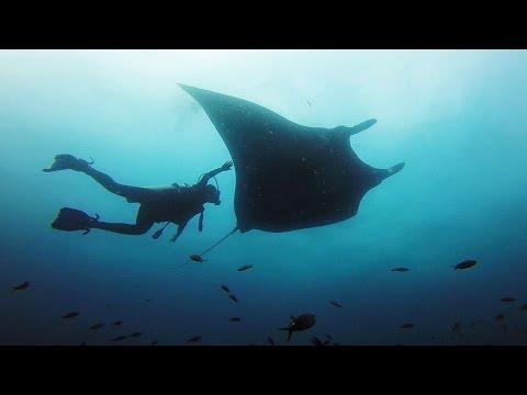 GoPro: Giant Manta Rays