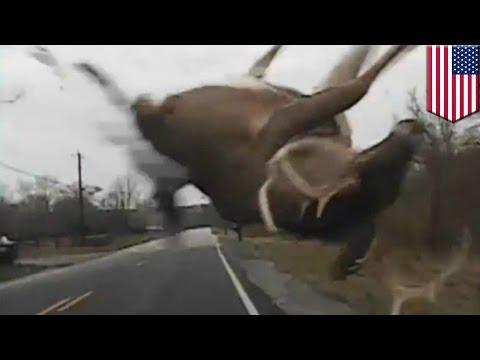 Doh! A deer!