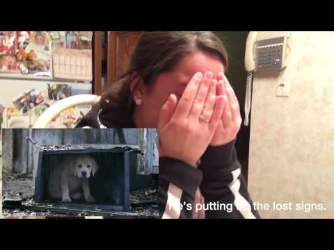 Best Reaction to Budweiser Lost Puppy Commercial!!!