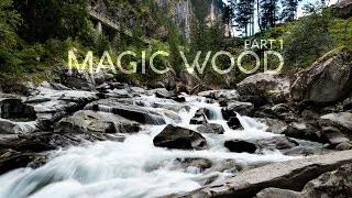 Magic in the Woods | Part 1 by BlocBusters