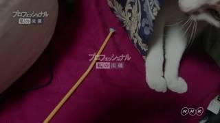 猫日記の動画
