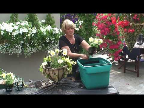 How to Make a Mixed Summer Hanging Basket (Advanced)