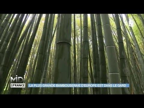 La plus grande bambouseraie d'Europe, à Anduze