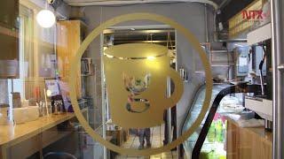 La Gatería, primer Cat-Café en México