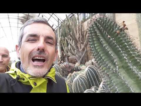 come eliminare e prevenire la cocciniglia nelle piante grasse