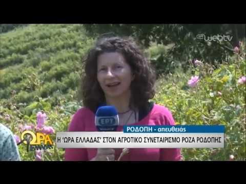Τα ρόδα ανθίζουν στη Ροδόπη | 07/06/19 | ΕΡΤ