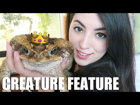 My Giant Toad! | Marine Toads | Invasive Cane Toad | Creature Feature